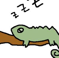ペット・カメレオン (Chamäleon)